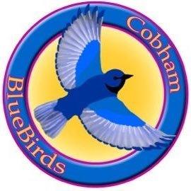 Cobham Bluebirds Rugby Club Logo - Cobham Elmbridge Surrey Sports Club