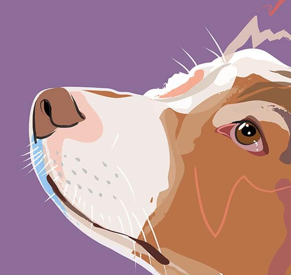 Dog Portrait-Contemporary Art by Katie Bell - Weybridge Elmbridge Surrey Artist