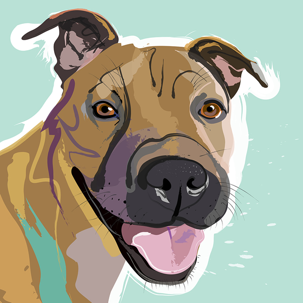 pet portraits doga and cats by surrey artist and graphic designer