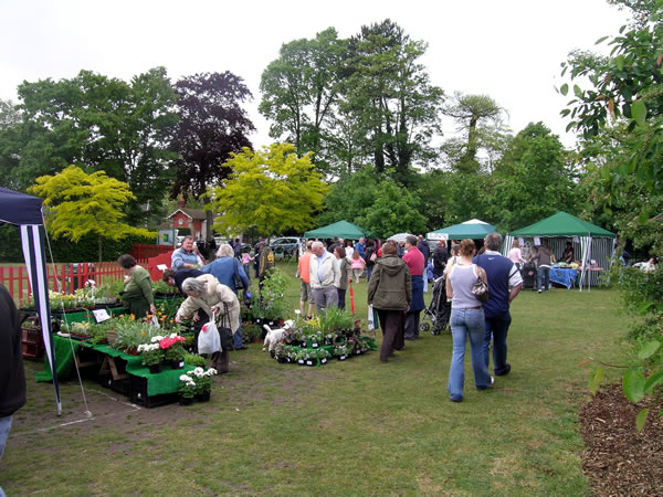 Plants Stall at Oatlands Village Fair near Walton On Thames Elmbridge Surrey