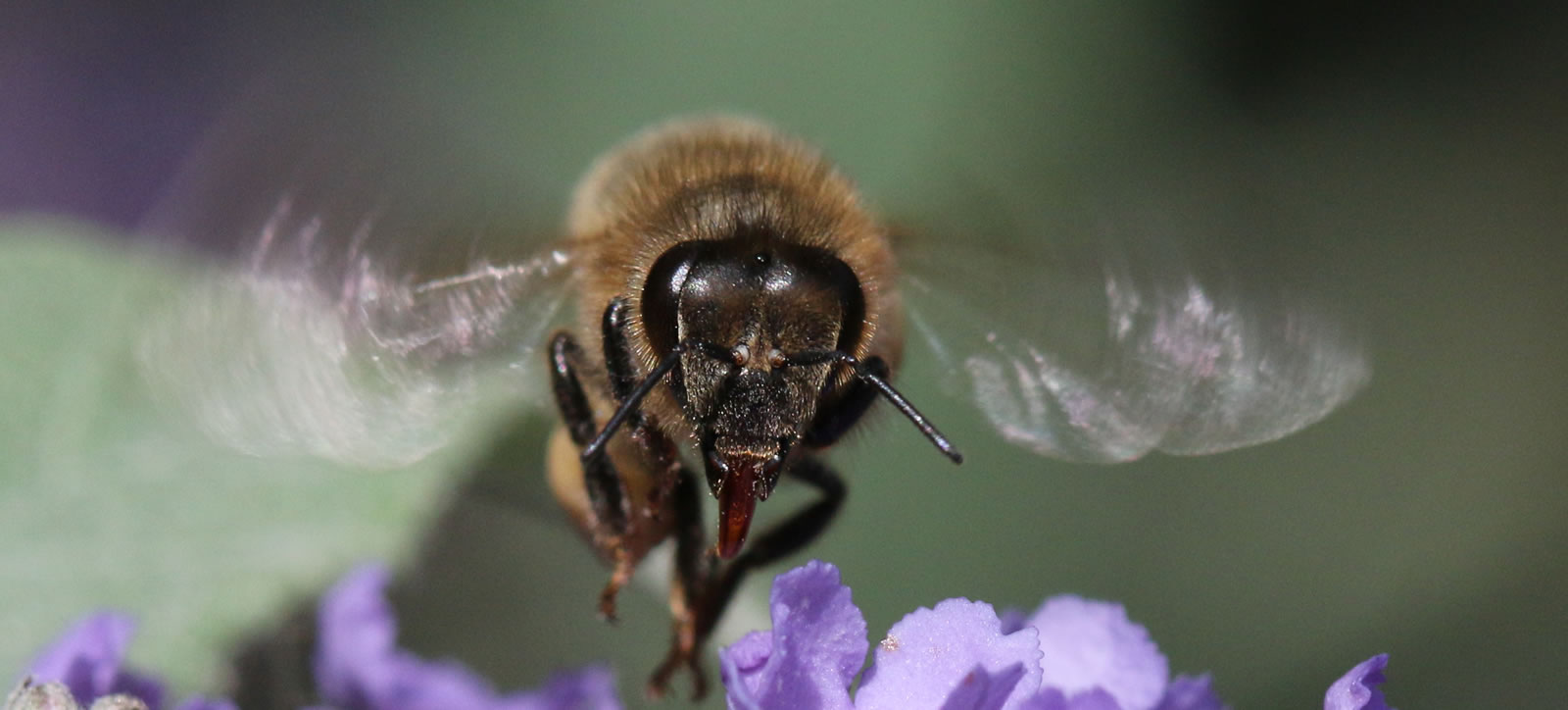 Weybridge Beekeeping division are running a training course, both theory and practical, for new beekeepers