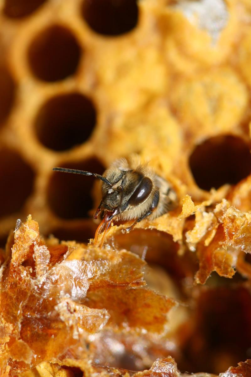 Bee Hive - Honey gathering at teaching apiary in Weybridge Surrey