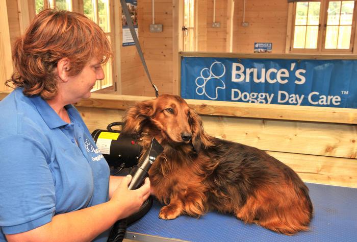 Dog Grooming Surrey