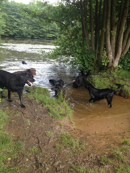 Dog Walking Service Surrey