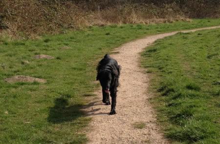 Dog Walking Surrey Animal Elves