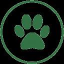 Dog Day Care based in Hersham Elmbridge Surrey