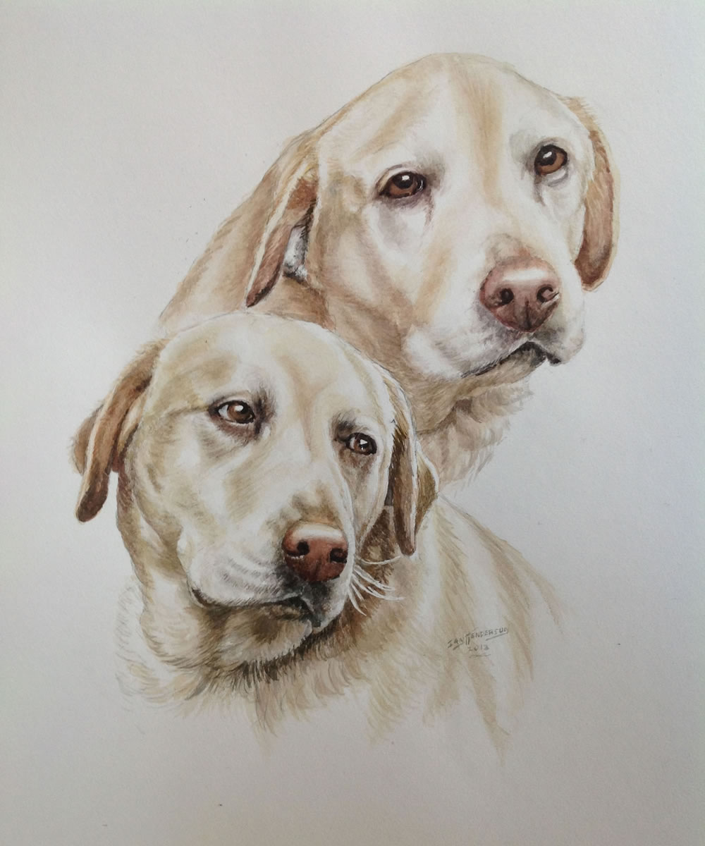 Dogs Portrait Painting service for Weybridge Dog owners by Surrey Artist Ian Henderson