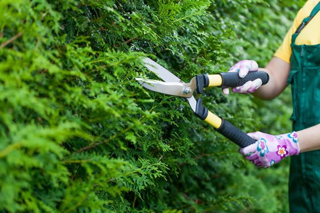 Gardening Weybridge Surrey