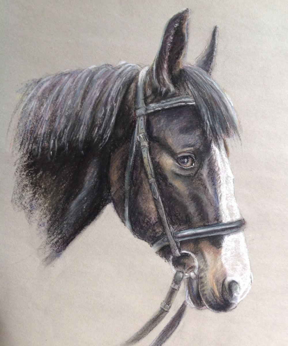 Horse Portrait Painting Commission - Jedi - Soft Pastel - Ideal personalised gifts - Weybridge Surrey Artists Advertising