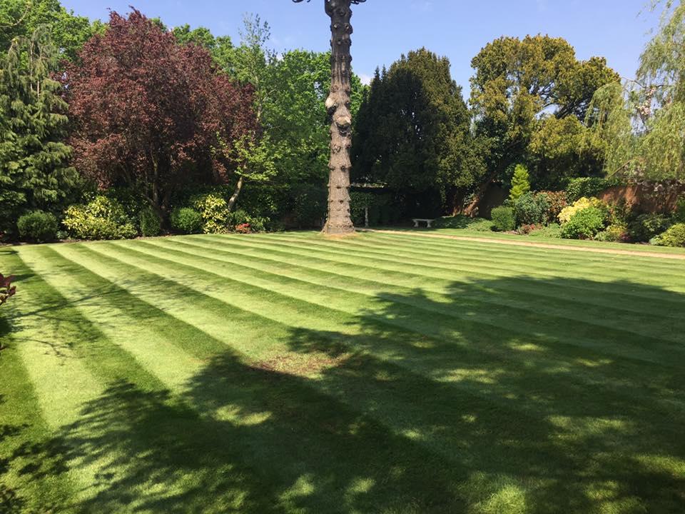 Mowing Turf Laying Weybridge Elmbridge Surrey