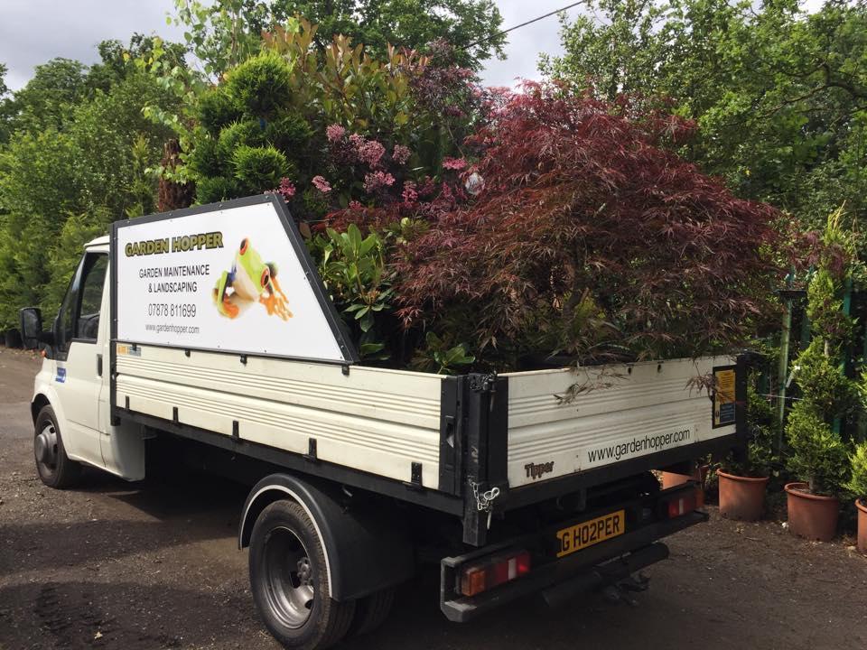 Potting Planting Garden Lanscaping Weybridge Elmbridge Surrey