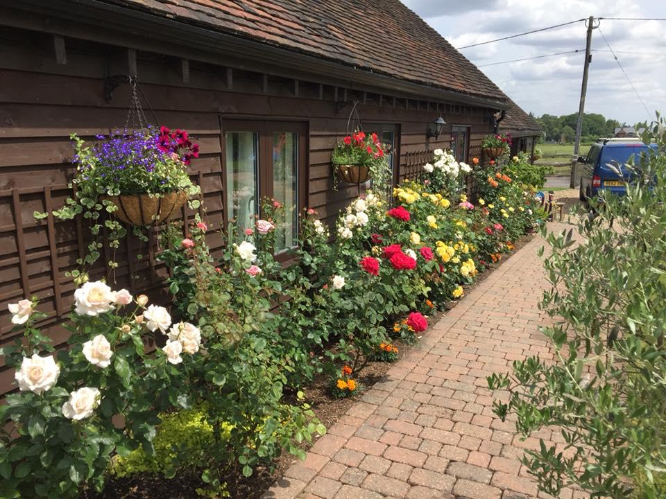 Pruning Lawn Care Paving Surrey