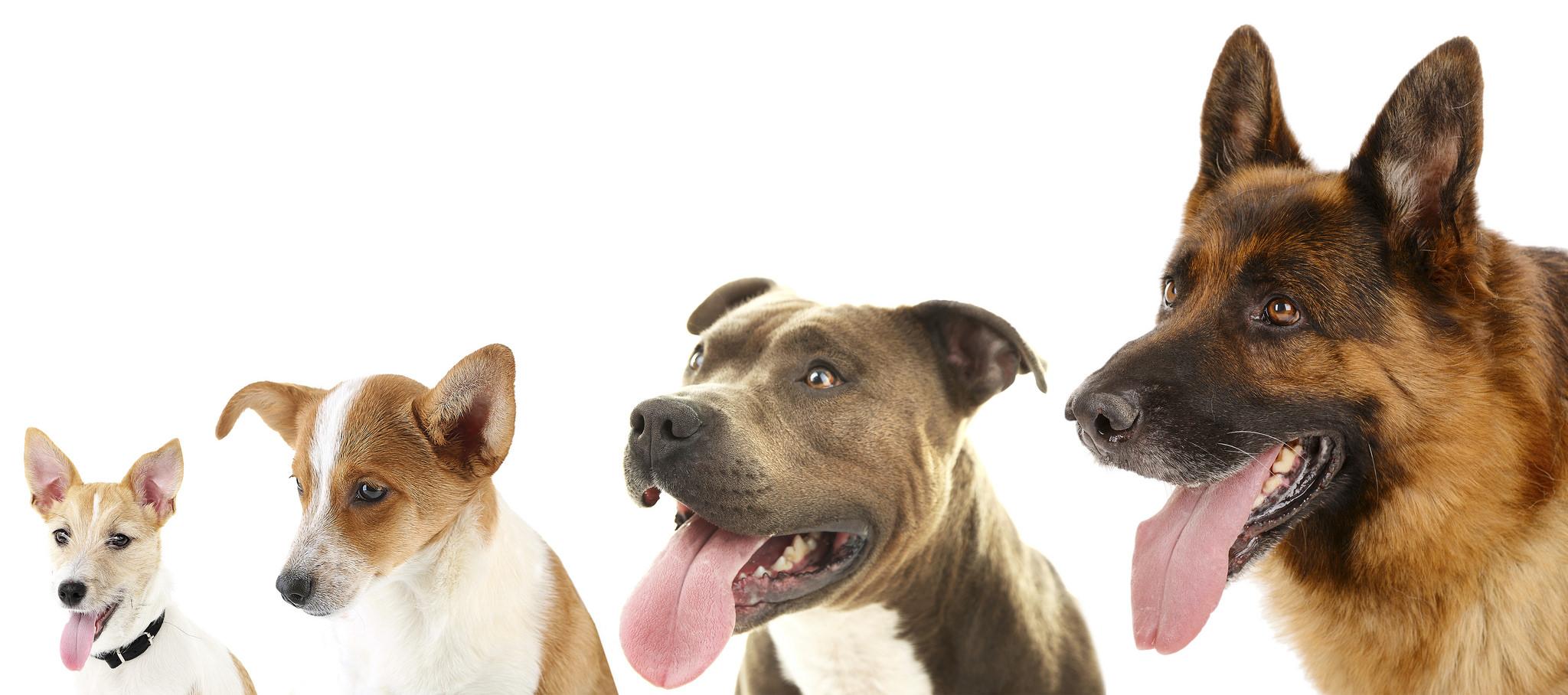 Dog Show at Brooklands Fun Day at Community Park Weybridge Surrey